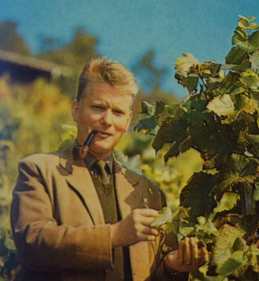 Johann Rudolf Erne im Weinberg; Hotelprospekt 1970er Jahre; Archiv Hotel Blume.